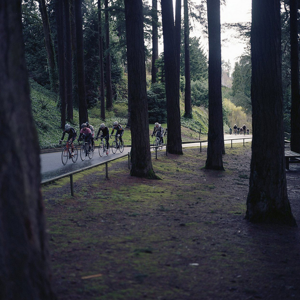 I boschi di Portland
