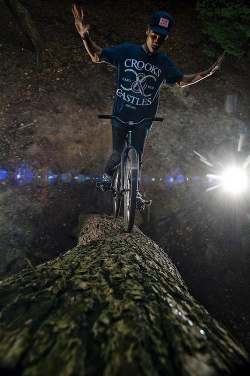 Bici sull'albero