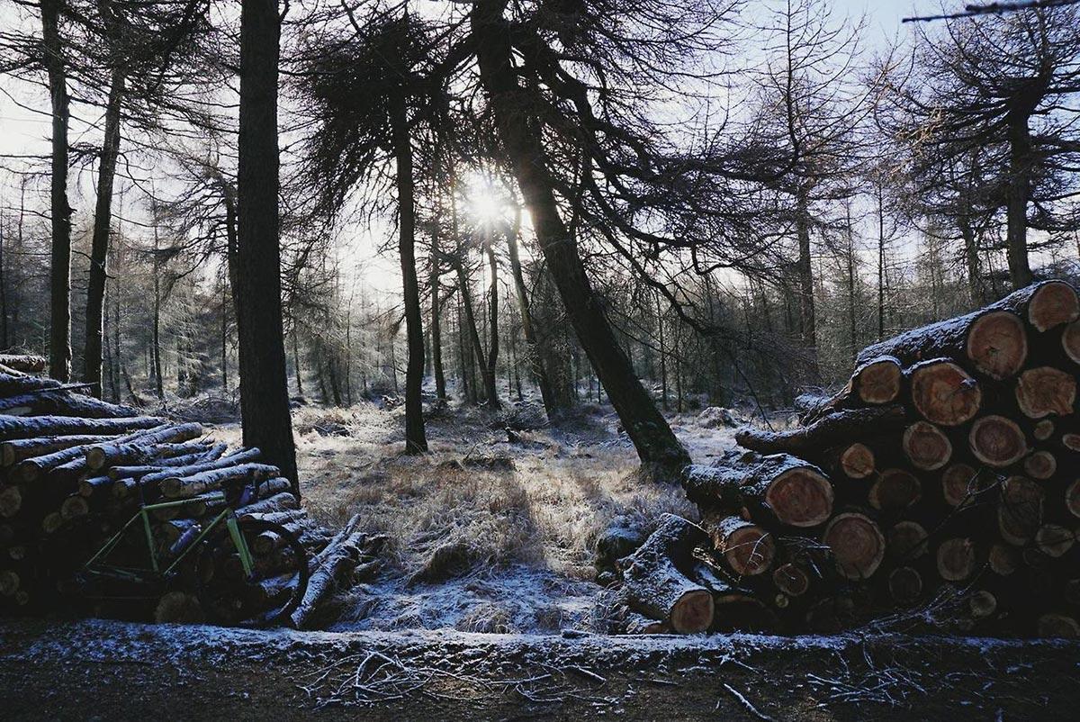 Ceppi e mountain bike in un paesaggio invernale