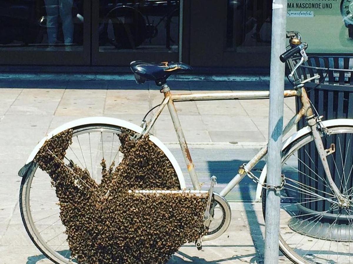 Bici avvolta da uno sciame d'api a Milano