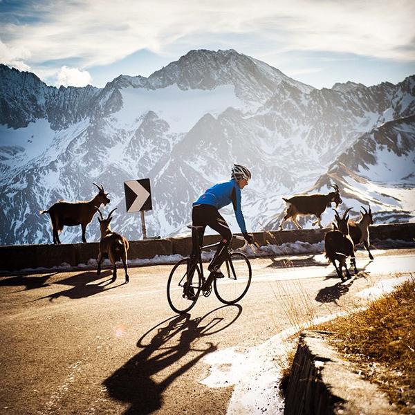 In bici sulle Alpi con gli stambecchi