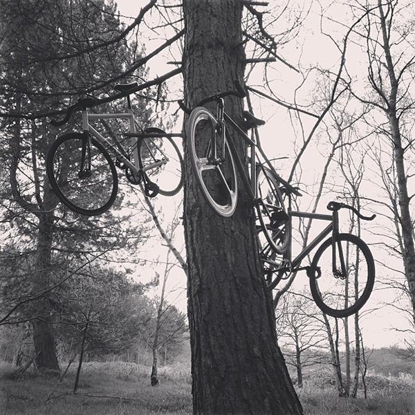 Biciclette appese a un albero
