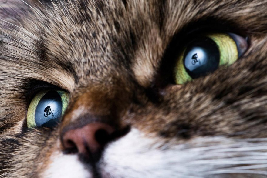 Un gatto guarda una BMX