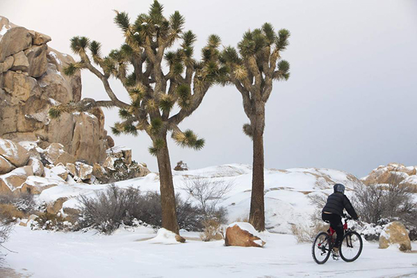 In bici nel Grand Canyon d'inverno