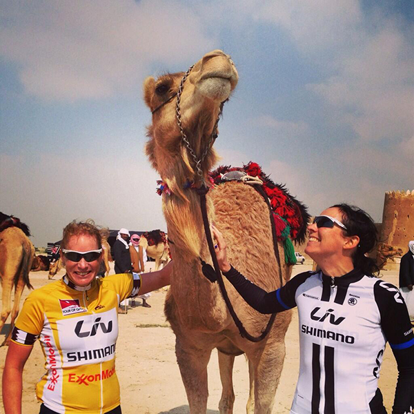 Qatar, cicliste e cammelli