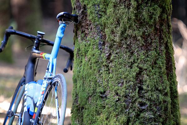 Bici appoggiata a un albero ricoperto di muschio