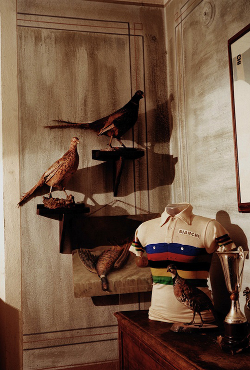 Uccelli impagliati e maglia iridata