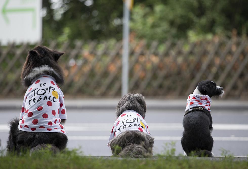 Cani con magliette a pois del Tour de France
