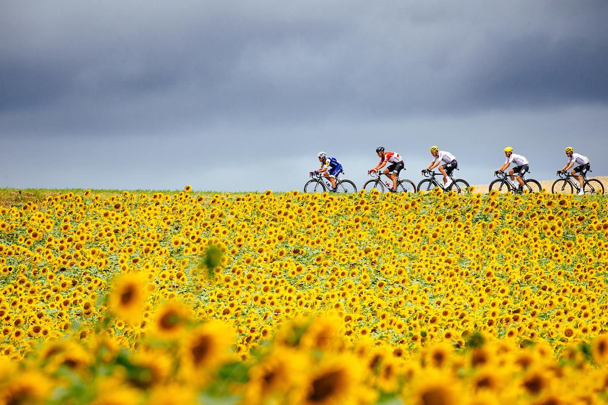 Il Tour de France 2017 attraversa un campo di girasoli