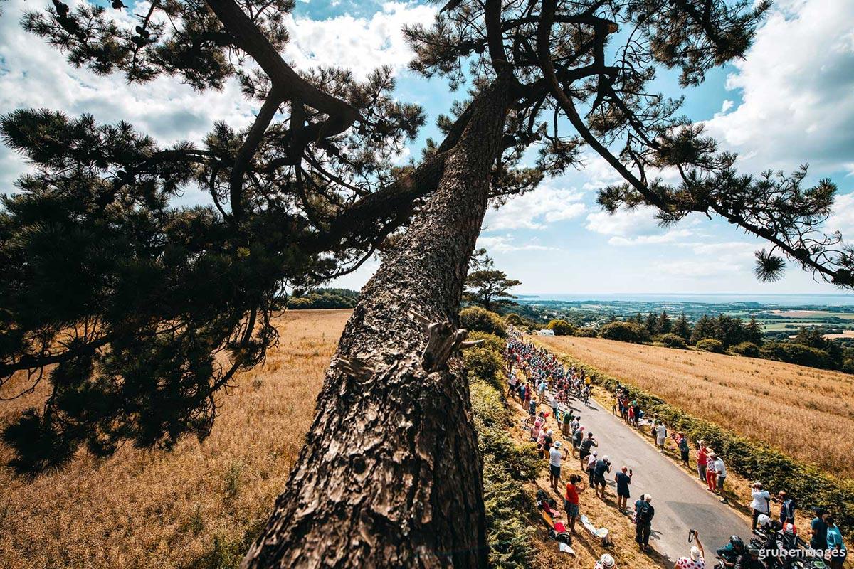 Il Tour de France 2018 visto da un pino marittimo