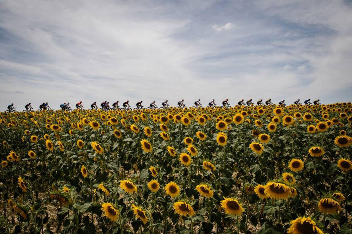 Campo di girasoli al Tour de France 2019